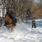Crins des Vosges offre -50% sur le 3ème cheval loué